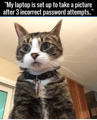 """Caught red-handed! 😂😂: """"My laptop is set up to take a picture  after 3 incorrect password attempts."""" Caught red-handed! 😂😂"""