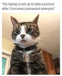 """#HackerCat #AnarchyCatIsEverywhere: """"My laptop is set up to take a picture  after 3 incorrect password attempts"""" #HackerCat #AnarchyCatIsEverywhere"""