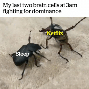 The struggle is real 😂🙈: My last two brain cells at 3am  fighting for dominance  Netflix  Sleep The struggle is real 😂🙈