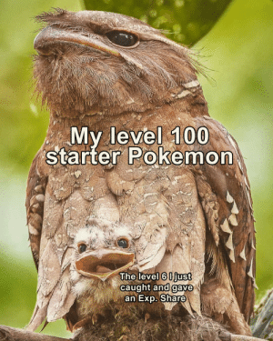 exp: My level 100  starter Pokemon  The level 6 0just  caught and gave  an Exp. Share