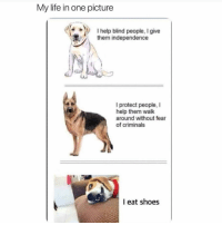 Funny, Life, and Lol: My life in one picture  help blind people, I give  them independen  I protect people, I  help them walk  around without fear  of criminals  I eat shoes Lol 🙄
