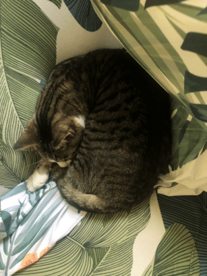 My little curled up Sophie bean.: My little curled up Sophie bean.