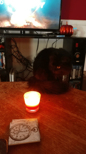 My little demon summoning herself. This is my first post here be kind.: My little demon summoning herself. This is my first post here be kind.