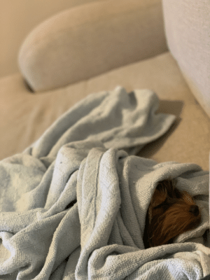 My little guy decided to take a nap next to my while I play Let's Go Eevee. I bundled him up, and I'm pretty sure he doesn't mind it at all.: My little guy decided to take a nap next to my while I play Let's Go Eevee. I bundled him up, and I'm pretty sure he doesn't mind it at all.