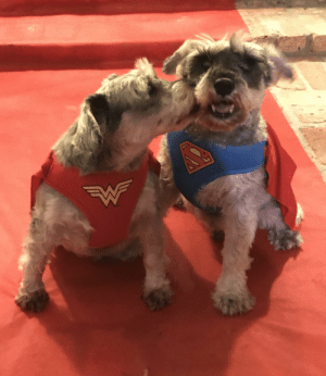 My little superheroes on the red carpet!: My little superheroes on the red carpet!