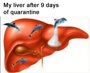My liver is back, as well as dolphin does: My liver is back, as well as dolphin does