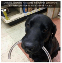 My local hardware has a dog that follows you around,  and takes your items to the counter for you.  Shitheadsteve Employee of the Year