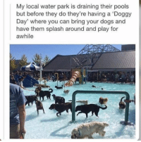 Doggying: My local water park is draining their pools  but before they do they're having a Doggy  Day' where you can bring your dogs and  have them splash around and play for  awhile