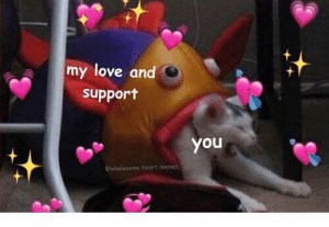 love and support :): my love and  support  you  ewholesome heart memes love and support :)