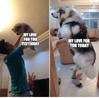 "<p>Grows bigger everyday! via /r/wholesomememes <a href=""http://ift.tt/2EiNDMl"">http://ift.tt/2EiNDMl</a></p>: MY LOVE  FOR YOU  YESTERDAY  MY LOVE FOR  YOU TODAY <p>Grows bigger everyday! via /r/wholesomememes <a href=""http://ift.tt/2EiNDMl"">http://ift.tt/2EiNDMl</a></p>"