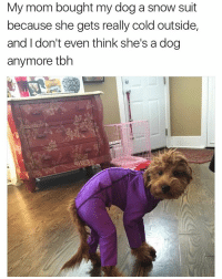 (@davie_dave) is one of the funniest meme pages on IG right now: My mom bought my dog a snow suit  because she gets really cold outside,  and don't even think she's a dog  anymore tbh (@davie_dave) is one of the funniest meme pages on IG right now
