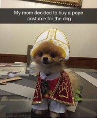 Memes, Pope Francis, and Butterfly: My mom decided to buy a pope  costume for the dog Follow my other accounts @antisocialtv @lola_the_ladypug @x__antisocial_butterfly__x ❤️