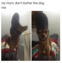 Memes, Mom, and 🤖: my mom: don't bother the dog  me: Beep beep