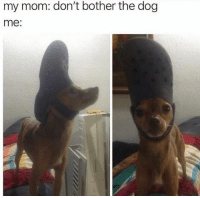 Funny, Head, and Mom: my mom: don't bother the dog  me: Look at the top of his head via /r/funny https://ift.tt/2QiEGZJ