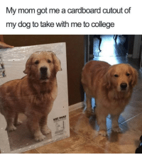 College, Dank, and Mom: My mom got me a cardboard cutout of  my dog to take with me to college