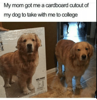 College, Memes, and Butterfly: My mom got me a cardboard cutout of  my dog to take with me to college Follow me @x__social_butterfly__x