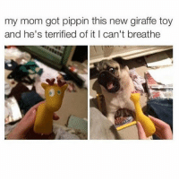 Memes, Giraffe, and Toys: my mom got pippin this new giraffe toy  and he's terrified of it I can't breathe Poor pupper - Mark