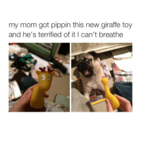 Memes, Toys, and Pippin: my mom got pippin this new giraffe toy  and he's terrified of it I can't breathe 😂😂