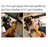 Dank, Pippin, and 🤖: my mom got pippin this new giraffe toy  and he's terrified of it I can't breathe Nooo don't be scared Pippin! 😂