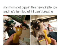 Giraffe, Pippin, and Mom: my mom got pippin this new giraffe toy  and he's terrified of it I can't breathe