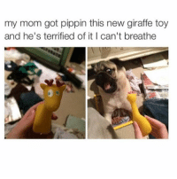 Memes, Giraffe, and Toys: my mom got pippin this new giraffe toy  and he's terrified of it I can't breathe Me