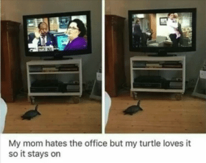 The Office, Office, and Turtle: My mom hates the office but my turtle loves it  so it stays on