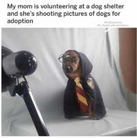 Dogs, Memes, and Reddit: My mom is volunteering at a dog shelter  and she's shooting pictures of dogs for  adoption  @DrSmashlove  Pic: Reddit u/AnnaVsAliens COT DAMMIT THIS IS WHAT I MEAN WHEN I SAY I WANT TO ADOPT ALL THE PUPS! BE A HERO TO A LIL ANGEL! ADOPT DON'T SHOP YA GET ME! 😍