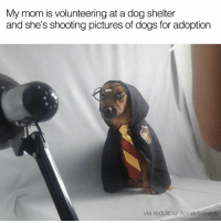 Dank, Dogs, and Reddit: My mom is volunteering at a dog shelter  and she's shooting pictures of dogs for adoption  via reddit: u/ Annavsalie