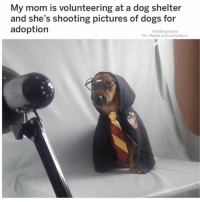 Dogs, Love, and Memes: My mom is volunteering at a dog shelter  and she's shooting pictures of dogs for  adoption  @DrSmashlove  Pic: Reddit u/AnnaVsAliens i love everything about this omg (@drsmashlove)