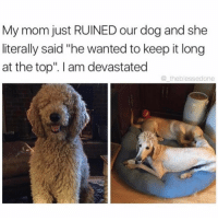 """Memes, 🤖, and Devastator: My mom just RUINED our dog and she  literally said """"he wanted to keep it long  at the top'. I am devastated  theblesseedone 😂😂😂 (@dogsbeingbasic)"""