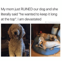 """I thought terrible man buns were out of style? (@_theblessedone ): My mom just RUINED our dog and she  literally said """"he wanted to keep it long  at the top"""". I am devastated  the blessedone I thought terrible man buns were out of style? (@_theblessedone )"""