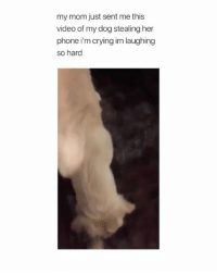 For some people doing math can be physically painful Via @annika.bobb yyc: my mom just sent me this  video of my dog stealing her  phone i'm crying im laughing  so hard For some people doing math can be physically painful Via @annika.bobb yyc