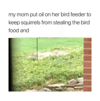 Food, Girl Memes, and Mom: my mom put oil on her bird feeder to  keep squirrels from stealing the bird  food and lmaoo smart move