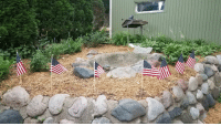 Flowers, Old, and Mom: My mom said I had bare spots in my garden and I should plant more flowers. Decided to plant Old Glory.