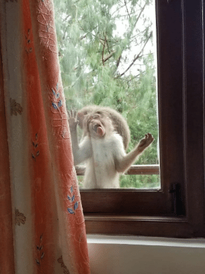 My mom said that a monkey was sitting outside her window and kept licking it. I found it hard to believe. She then sent me this gem. via /r/funny https://ift.tt/2KNBMsY: My mom said that a monkey was sitting outside her window and kept licking it. I found it hard to believe. She then sent me this gem. via /r/funny https://ift.tt/2KNBMsY