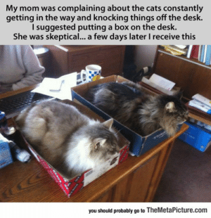 Cats, Tumblr, and Blog: My mom was complaining about the cats constantly  getting in the way and knocking things off the desk.  I suggested putting a box on the desk.  She was skeptical... a few days later I receive this  you should probably go to TheMetaPicture.com srsfunny:Cat Traps