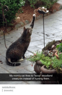 """boop: My mom's cat likes to """"boop"""" woodland  creatures instead of hunting them.  tastefully offensive  I [mrsmordorl"""