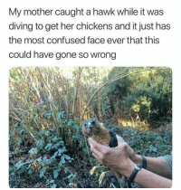 Confused, Family, and Fucking: My mother caught a hawk while it was  diving to get her chickens and it just has  the most confused face ever that this  could have gone so wrong Let go of me Helen I have a fucking family to feed via /r/memes https://ift.tt/2L6JhZ0