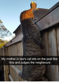 Neighbors, Cat, and Mother: My mother in law's cat sits on the post like  this and judges the neighbours Judging the neighbors