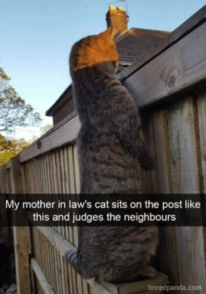 This is 😹: My mother in law's cat sits on the post like  this and judges the neighbours  boredpanda.com This is 😹