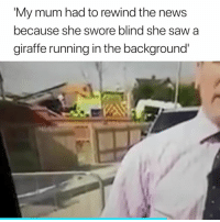 News, Saw, and Giraffe: My mum had to rewind the news  because she swore blind she saw a  giraffe running in the background This is hilarious 😂😭