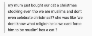 Tis always the season for wholesome memes 🐱: my mum just bought our cat a christmas  stocking even tho we are muslims and dont  even celebrate christmas?? she was like 'we  dont know what religion he is we cant force  him to be muslim' hes a cat? Tis always the season for wholesome memes 🐱