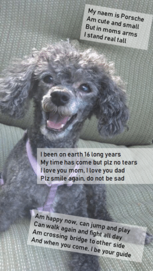 Beautiful, Cute, and Dad: My naem is Porsche  Am cute and small  But in moms arms  I stand real tall  I been on earth 16 long years  My time has come but plz no tears  I love you mom, I love you dad  Plz smile again, do not be sad  Am happy now, can jump and play  Can walk again and fight all day  Am crossing bridge to other side  And when you come, I be your guide I miss you my beautiful girl