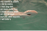 <p>Pls don squish</p>: my naem is shark  i lik to swim  i hav big tail  an sum cute fins  i have sharp teefs  an dat is cool  but pls don squish  i wil bite u <p>Pls don squish</p>