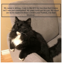 Cats, Cute, and Dogs: My name is Atticus. I was in the ICU for two days but it turns  out I was just constipated! My giant turd cost $2,536. My craps  are more expensive than a small Louis Vuitton, I'm that  fabulous Submitted by @jess_talah_atticus cat cats catsofinstagram kitten kittens kitty kitties funny dog fun dogs dogsofinstagram doggy doggie doggies funnydog pets gato petsofinstagram animal cute puppies pup puppy katze puppiesofinstagram cat_shaming catstagram pet kittensofinstagram