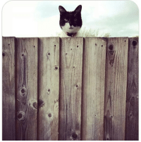 Cats, Cute, and Dogs: My name is Mina, part of the neighbourhood watch & I like to make sure that next door is doing a proper job at gardening. Submitted by @kelly_mina cat cats catsofinstagram kitten kittens kitty kitties funny dog fun dogs dogsofinstagram doggy doggie doggies funnydog pets gato petsofinstagram animal cute puppies pup puppy katze puppiesofinstagram cat_shaming catstagram pet kittensofinstagram