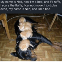 Head, Scare, and Amazing: My name is Ned, now I'm a bed, and if I ruffs,  I scare the fluffs, I cannot move, I just play  dead, my name is Ned, and I'm a bed. Sing it in your head to the tune of my name is mud by Primus and it becomes ten times more amazing
