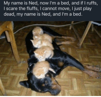 Scare, Play, and Name: My name is Ned, now I'm a bed, and if I ruffs,  I scare the fluffs, I cannot move, I just play  dead, my name is Ned, and l'm a bed. Ned the Bed