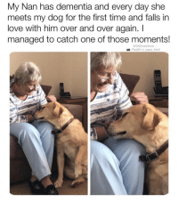 Beef, Love, and Memes: My Nan has dementia and every day she  meets my dog for the first time and falls in  love with him over and over again. I  managed to catch one of those moments!  @DrSmashlove  Reddit u/ papa beef @drsmashlove is a must follow for all animal lovers!!