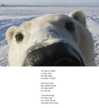 Cute, Funny, and Bear: my naym is bear  is very cold  but das okay  cus bear is bold  dis funny ting  ben watching me  it kiel vsird  so i go see  i find the thing  it kinda cute  so i walk rite up  nd boop with snoot <p>Found this very cute poem</p>